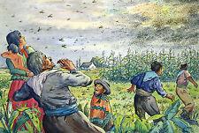 Ludwig Luis NEW 1897-1980 Hamburg/Watercolour locusts on field/South America