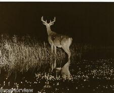George Shiras III Greatest Wildlife Photo Hark Deer Hears Wolf 1900 Worlds Fair