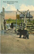 Bears Mineral Palace Park Pueblo Colorado Black Bear Unused Postcard D26