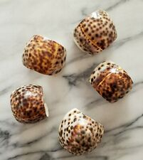 NEW 5 Natural Sea Shell Tiger Leopard Cowrie Napkin Rings Holders Coastal Beach