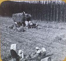 Growing Hops/Harvesting Barley, Near Bamberg, Germany, Magic Lantern Glass Slide