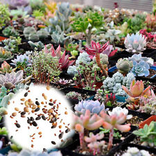 400pcs Mixed Succulent Seeds Stones Plants Cactus DIY Home Garden Beauty
