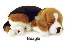 Beagle- Il cucciolo che respira - PERFECT PETZZZ