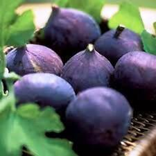 "Fig Tree ""LSU Purple"" Price Includes Four (4) Plants"