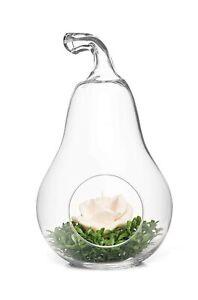 "Vintage Pear Shaped Clear Glass Vase Bowl Planter Terrarium Display - 17"" Tall"