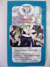 Atherosperma moschatum  - Sassafras 10 seeds