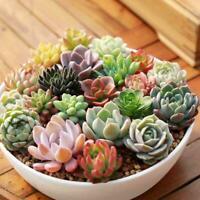 300x Mini Cactus Seeds Bonsai Plant Flower Indoor Succulent Perennial Rare Pot 2