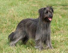 Metal Refrigerator Magnet Black Gray Pyrenean Shepherd Dog Standing Dogs