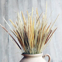50X Natural Dried Flowers Goldenrod Reed Bunch Wedding Home Floral Decor DIY