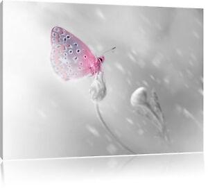 Märchenwald mit Schmetterling Leinwandbild Wanddeko Kunstdruck