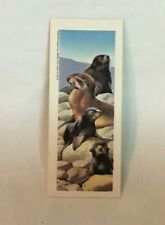 * 1969 National Biscuit Sugar Daddy WILDLIFE BABY ANIMALS Trade Card