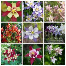 100Pc Garden Columbine Seeds Plants Flowers Aquilegia Garden Nature Fresh Beauty