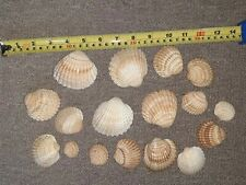 17 Beach Sea Shells Craft Art Project