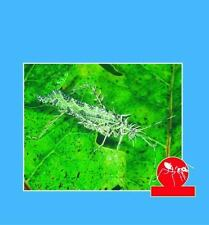 Homes and Habits of Insects (Six Legged World)