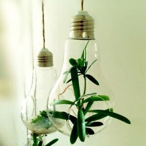 Glass Bulb Lamp Shape Flower Water Decor Wedding Office Home Pot Container b49