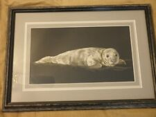Sally Miller-Maxwell Original Scratchboard Artwork // Baby Seal //Signed//Great