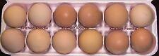 ONE DOZEN  FRESH - Black Australorp Chickens HATCHING EGGS