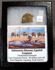 Rare Saltasaurus Dinosaur Eggshell egg shell #199