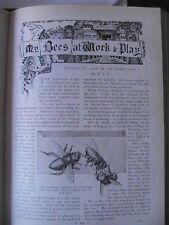 Bees Beekeeping Beehive Swarm Beekeeper Honeycomb Insect Worker Old Article 1901