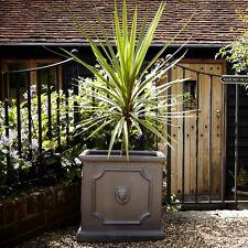32cm Clayfibre Faux Lead Lion Head Square Garden Planter/box Flower Plant Pot