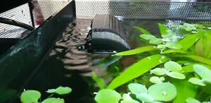 Betta Flow Reducer Aquarium  BLACK.compatible with Fluval Flex. & 60L Spec