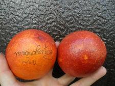 Rare » Citrus Sinensis Red -Red Orange fruits -unusual oranges - 5 fresh seeds -
