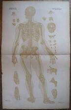 Lithographie, Ostéologie syndesmologie postérieur, Bourgery et Jacob, v. 1830