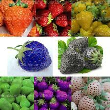 8 Colors Sweet Strawberry Everbearing Vegetable Fruit Seeds 1600 PCS