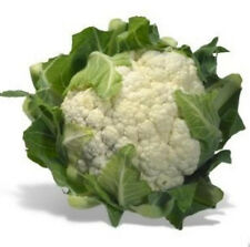 200+ Organic Snowball Cauliflower Seeds ~Delicious Healthy Staple Survival Food