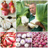 Garlic Bonsai Orhanic Seeds Plants Healthy Diy Onion Garlics Rare As 200pcs
