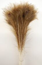 """50 Pcs PEACOCK TAILS Natural DARK BLEACHED Feathers 25""""-30"""" Crafts/Bridal/Hats"""