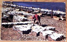 Vintage Postcard w / stamp Drying Salt Fish Nova Scotia 1968 Canada D87