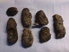 English Wild Barn Owl Pellets (pack of 7)