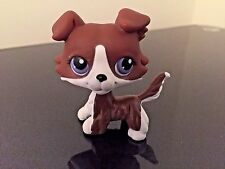 Littlest Pet Shop Collie Dog LPS Chocolate White Purple Eyes magnet USA SELLER