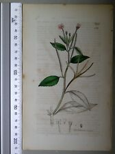 English Botany, Smith, Sowerby, handcoloured copperplate, 546, 3.Edition,1850.