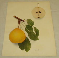 1921 Antique Print/LINCOLN/From Pears of New York, by Hedrick