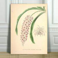 """JEAN LINDEN - Beautiful White & Pink Orchid #5 - CANVAS ART PRINT POSTER -36x24"""""""