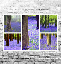 STUNNING BLUEBELL WOODS CANVAS COLLAGE #2 QUALITY LANDSCAPES A1 BOX CANVAS