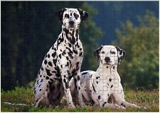 Dalmation Dogs A4 JIGSAW Puzzle Birthday Christmas Gift (Can Be Personalised)