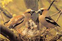 B98695 bird oiseau  animaux animals