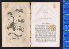 Flea, Garden Spider, Tarantula, Scorpions, Centipede, Millipede - 1830 Goldsmith