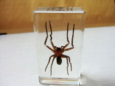 Hot sale spider insect fashion insect Real big spider clear style paperweight