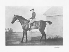 The Race Horse 'Gimcrack' - Antique Print 1901