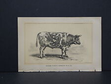 Cows Bulls Cattle Dairy Farming 1888 Engraving #076 Durham Schwitz Normande Ox