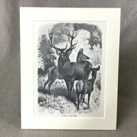 1894 Antico Stampa Vittoriano Incisione Wild Rosso Deer Cervo Doe Woodland Art