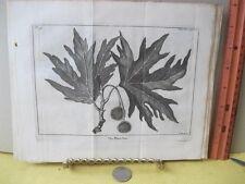 Vintage Print,PLANE TREE,SPECTACLE DE LA NATURE,1736,Tree,Plate 9