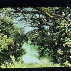 Magic Lantern Glass Slide Photo Tropical Forest South America Color