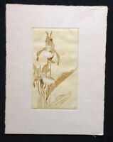 Arthur Illies, Fliegenorchis, Farbradierung aus dem Nachlass, 1927