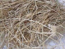 10kg Rabbit guinea pig small animal rye Hay food bedding