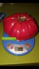 TOMATE  para RECORD  peso hasta 3kg 50 Semillas Seeds